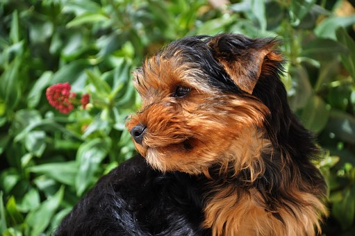 lovable-dog